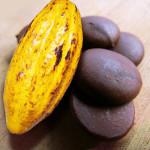 Antioxidantes do Cacau